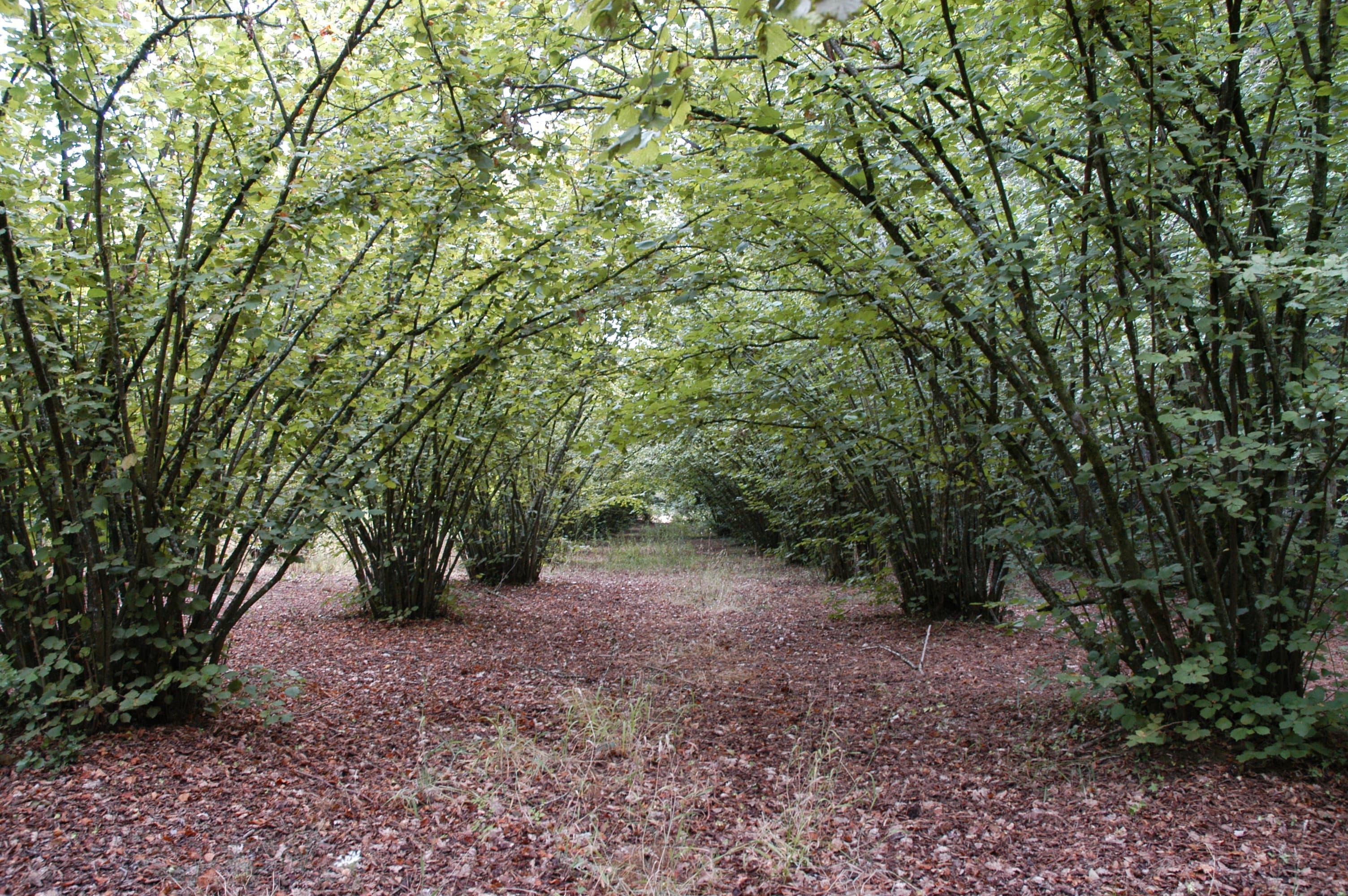 Productes Singulars De La Selva: Avellana De Brunyola