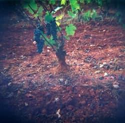 Baldiri Vins